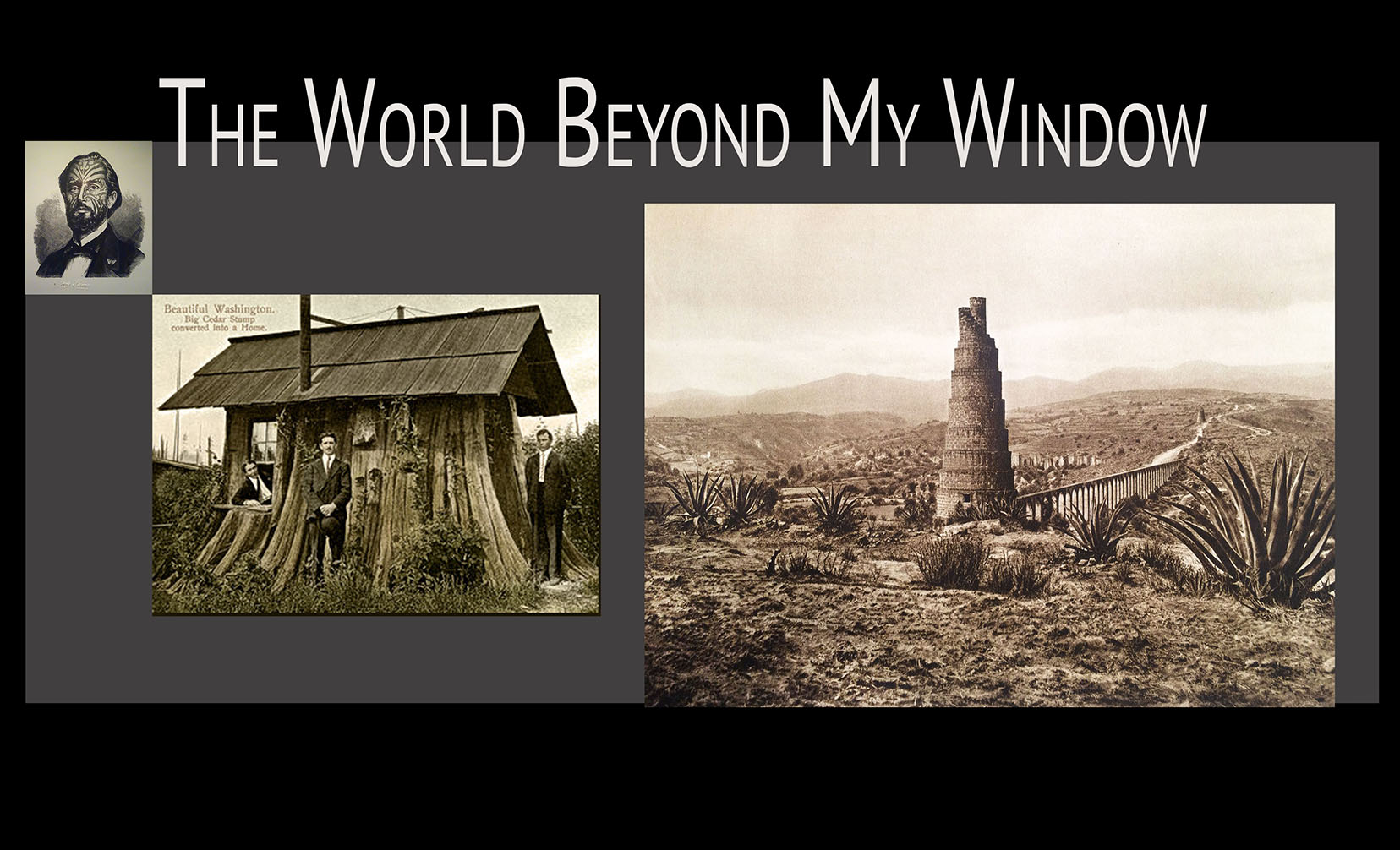 World Beyond My Window stump men-1
