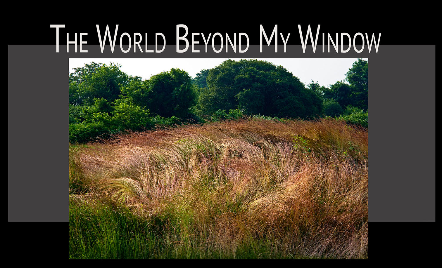 World Beyond My Window template-1